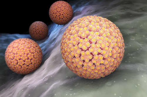 Nearly One-quarter of US Adults Have High-risk HPV