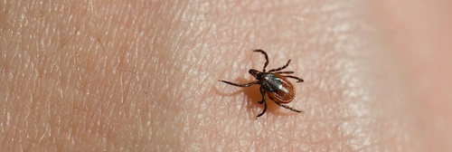 Connecticut Reports its First Human Case of Powassan Virus