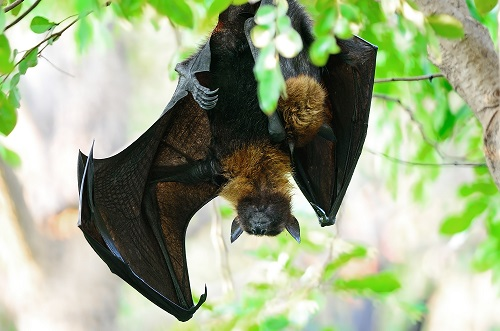 Bats Provide Key Link in Undiscovered Disease Detection