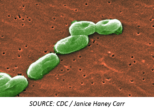 <em>Burkholderia cepacia</em> Infections Linked with Unlikely Source