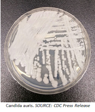 Addressing the Growing Problem of Resistant Fungi
