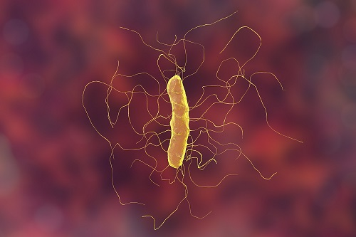 Ribaxamase Found to Prevent New Onset <em>Clostridium difficile</em> Infections
