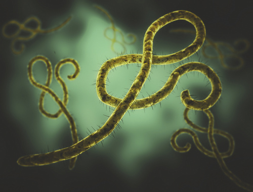 Ebola RNA Can Persist in Semen Two Years After Acute Infection Period