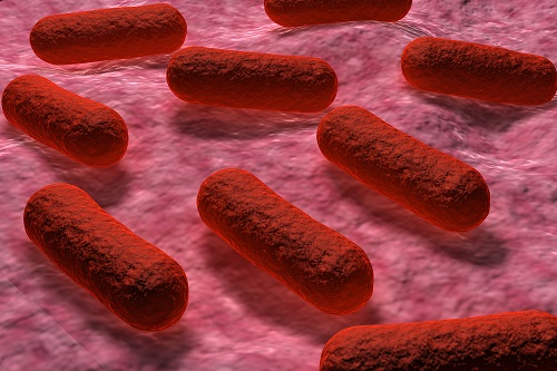 Investigators Scrambling to Find Source of Utah-Arizona <i>E. coli</i> Outbreak