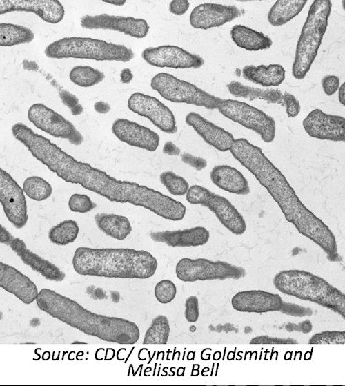 Genomic Features of the 2015 <i>Elizabethkingia</i> Outbreak
