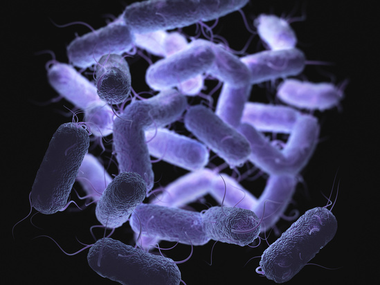 Controversies of Antimicrobial Transitions in Adults With Gram-Negative Bacteremia