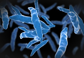 No Active TB Detected in HSCT Patients in Mexico, Study Finds
