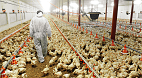 Farm to Table: How Antibiotic Use in Agriculture Affects Human Health