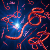 Ebola Virus Can Persist in Wastewater for Over a Week
