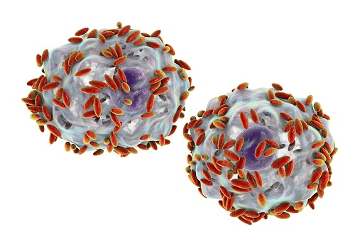 <em>Gardnerella</em> Bacteremia Reported in HIV-Positive Male