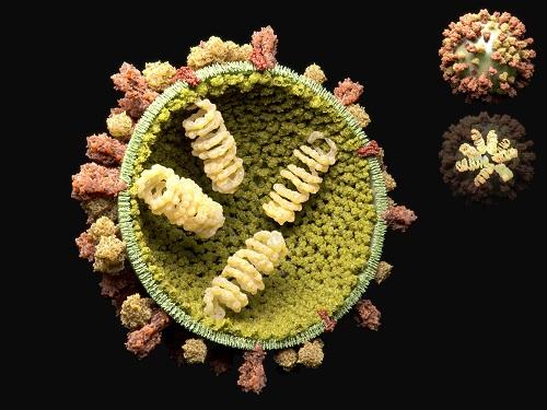 Influenza A Model Receives a Face-Lift