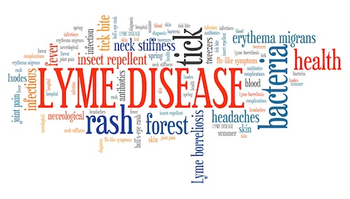 Bystander Activation of T Cells May Be Cause of Persistent Arthritis in Lyme Disease