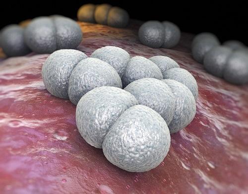 Fighting Meningococcal Disease in the