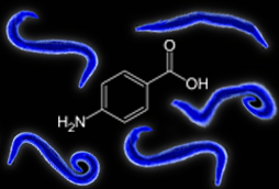 Forcing Pathogens to Compete for Resources May Help Thwart Drug Resistance