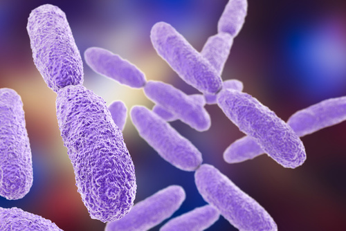 Researchers Discover More Strains of <i>Klebsiella</i> Bacteria Cause HAIs Than Previously Thought