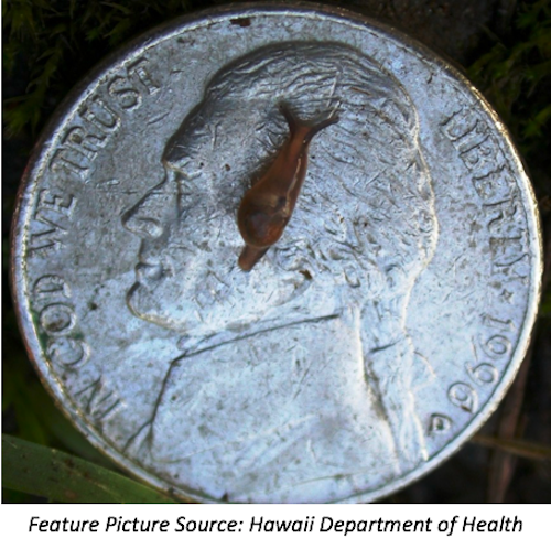 Health Care Providers Should Consider Rat Lungworm in Patients with Eosinophilic Meningitis