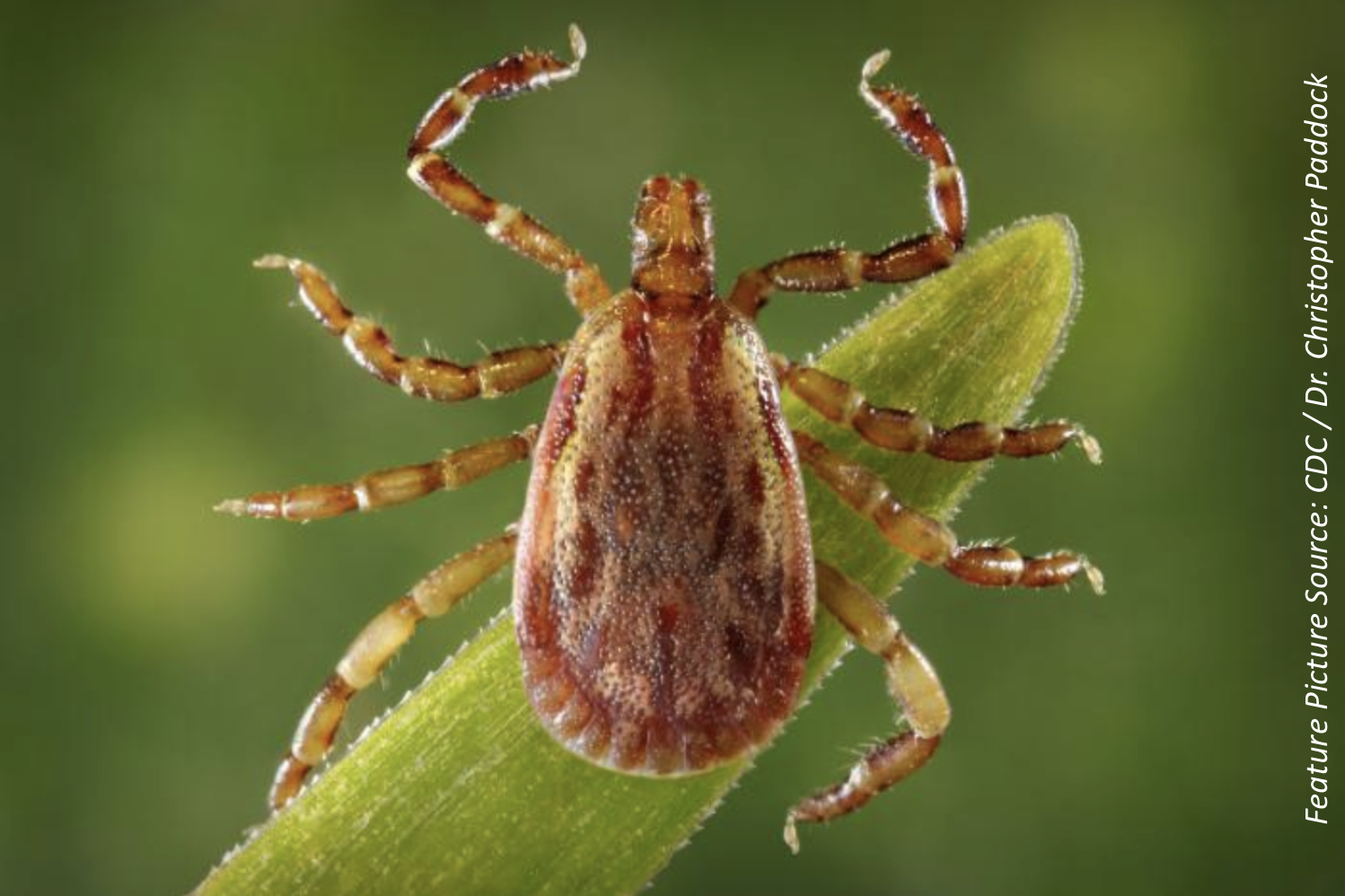 Rocky Mountain Spotted Fever Risk Factors Examined