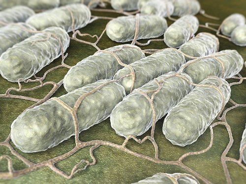<i>Salmonella</i> Promote Host Survival During Infection