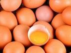 Australian Breakfast Buffet Links Salmonella Outbreak to Eggs