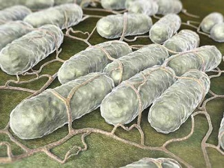 CDC Announces <i>Salmonella</i> Outbreak Featuring