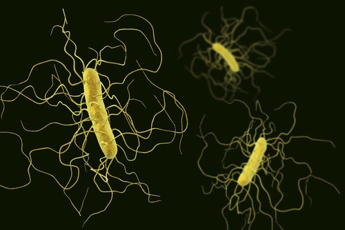 Probiotic Proves Deadly Against <i>Clostridium Difficile</i>