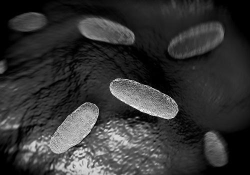 Multidrug-Resistant Gene Found in <em>Salmonella</em>